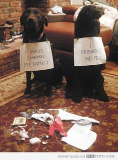 Haha this is too funny!!! I could totally see doing something like this for our dogs Bubba and Penny!