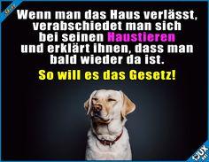 Das gehört einfach dazu! :) #Hausiere #Tierlieb #Hunde #Katzen #Hund #Katze #sowahr #Sprüche #Statusbilder