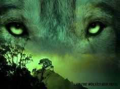 Protect our endangered wolves.