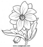 disegni_da_colorare_natura/fiore_fiori/dalia9650.JPG