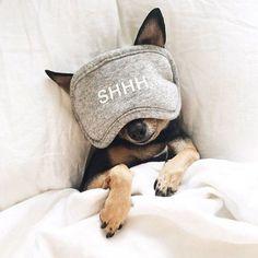 Puppy naps.