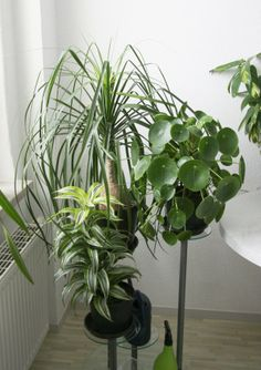 Using houseplants to improve the air quality in your home