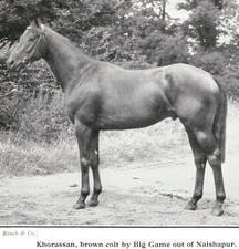 Khorassan(1947)Big Game- Naishapur By Nearco. 3x3 To Blenheim II, 4x5x5 To White Eagle. 7 Starts 2 Wins 1 Second. Classic Trial S(Eng), Dee S(Eng).