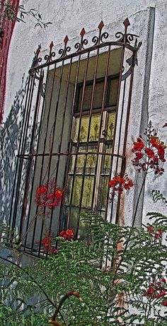 Arizona Mission has lovely wrought iron work on its window framed by a beautiful Mexican red bird of paradise plant. (Caesalpinia pulcherrima, Pea Family: ( Fabaceae ), Red Bird Of Paradise; Sometimes called Mexican Bird of Paradise which is really the common name for the yellow variety, Caesalpinia mexicana. Also called Pride of Barbados.)