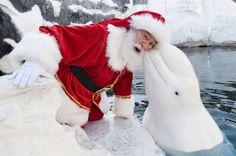 Santa at Sea World!
