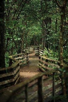 Corkscrew Swamp Sanctuary, Naples, Florida by Andrew H Wagner