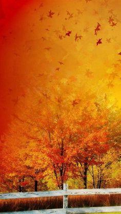 autumn explodes
