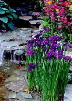 Waterfall by the irises