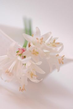 ダイヤモンドリリーhttp://hanaya87.com/library/flower/flmt430
