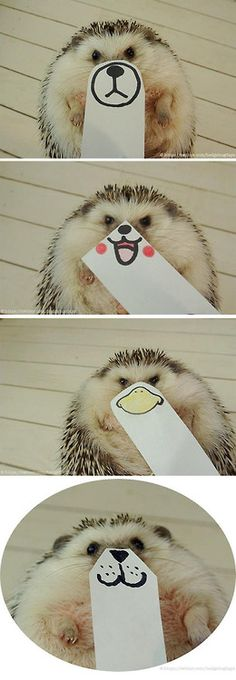 Hedgehog faces.