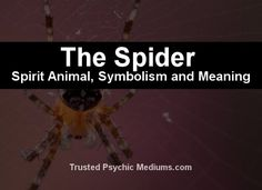 What does the Spider spirit animal really mean? Find out the true meaning and symbolism of the spider in this special spirit animal analysis. Spirit Animal Totem, Your Spirit Animal, Animal Totems, Spirit Meaning, Positive Traits, Negative Traits, Spider Dream Meaning, Animal Meanings
