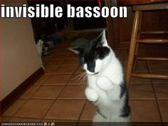 Kitty playing invisible bassoon!!  I love it!!!