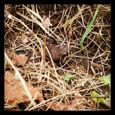 Nature hiding in the dead grass Toad, Grass, Nature, Plants, Naturaleza, Planters, Nature Illustration, Grasses, Outdoors