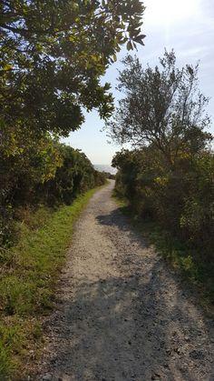 Sachuest Point Nat'l wildlife Refuge walking trail Trail, Wildlife, Walking, Country Roads, Walks, Hiking