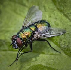 26 best common pennsylvania insects images bugs bed bugs rh pinterest com