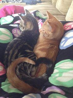 Love Cats - Album on Imgur