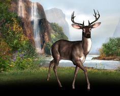 Buck by Water Falls