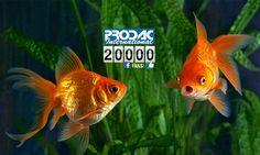 Agenzia di incontri pesce rosso incontri online Nederland