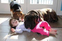 So cute! Mastiff's are so loving.
