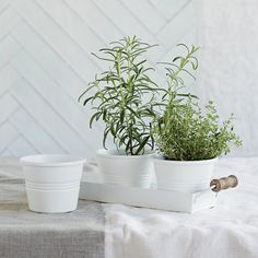 Enamel Herb Pots with Tray   The White Company