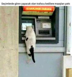 24 Haziran seçimlerinde görev alacak kedilerin maaşları şimdiden hesaplarına yatırılmış.