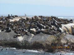Seal Island Boat Trip