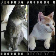 Athena (left) and Mi