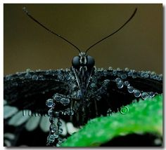 Insect covered in water droplets
