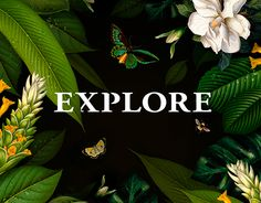 """Check out this @Behance project: """"Olympus Travel"""" https://www.behance.net/gallery/25921435/Olympus-Travel"""