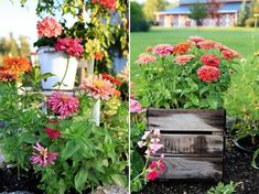 In I was - happily married. and very happily living a dream. Then my husband of years died. Everything changed. Flower Farm, Flower Pots, Zinnias, Yard Landscaping, Garden Styles, Geraniums, Garden Beds, Garden Inspiration, Outdoor Gardens