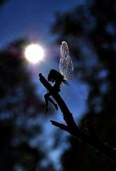 Silueta de un Hada del bosqueUna silueta se deja ver sobre una rama invadida por un destello luminoso de un astro que infunde energía. Un ser puro que desprende mágico amor.