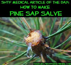 How to make a Salve out of Pine Sap... Great for cuts, bites, stings, burns... And good at well, keeping you from smelling... #camping #outdoors #survival