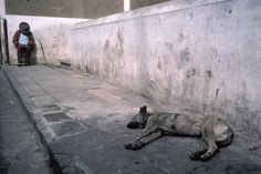 Alex Webb - Mexico. Guanajuanta. 1987. Sleeping man and dog.