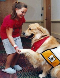 Service/Assistance Dogs