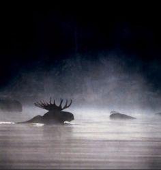 moose dawn | Flickr - Photo Sharing!