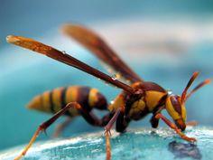 Wasp, very afraid of
