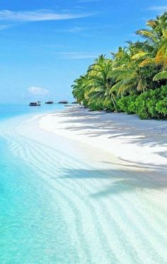 Beautiful sandy beach of Bora Bora French Polynesia  - ♡Beautiful Soul ♡ - Google+