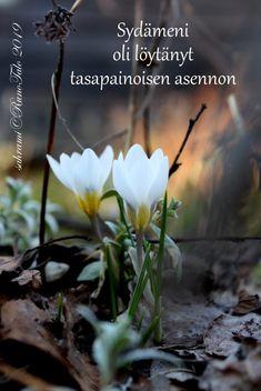 voimakortti Sydämeni oli löytänyt Affirmation Cards, Affirmations, Poems, Anna, Pictures, Photos, Poetry, Verses, Positive Affirmations