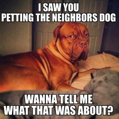 True story!  #French #Mastiff