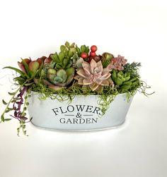 Succulent Gardening, Planting Succulents, Succulent Planters, Succulent Table Decor, Succulent Outdoor, Sedum Plant, Succulent Gifts, Succulent Care, Gardening Hacks