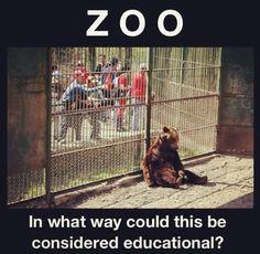 """Traducción de la foto: """"ZOO. ¿de qué manera podría esto ser considerado educativo?"""""""