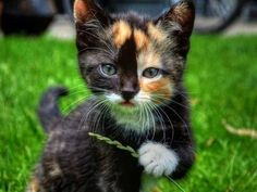 What a striking looking kitty…