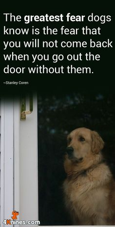 Dogs make such wonderful pets. That is why many first time canine owners prefer to take care of dogs over other possible pets. People who accept the responsibility of having a dog like a pet should re Animals And Pets, Baby Animals, Funny Animals, Cute Animals, I Love Dogs, Puppy Love, Cute Dogs, Yorkies, Diy Pet