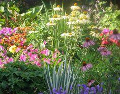 perennial flowers   Shady herbaceous perennials/ /sewing perennial seeds/