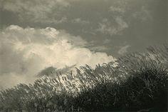 © Masao Yamamoto!  http://www.photography-now.com/images/Bilder/gross/B013752.jpg