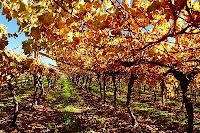 South Africa's Finest: Wine tasting in Stellenbosch vineyards Cape Town Accommodation, Wine Tasting, South Africa, Vineyard, Things To Do, Explore, City, Nature, Plants