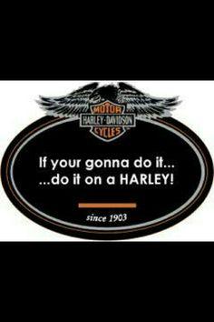Harley Davidson News – Harley Davidson Bike Pics Harley Gear, Harley Bikes, Biker Quotes, Motorcycle Quotes, Motorcycle Tips, Motorcycle Clubs, Harley Davidson Logo, Harley Davidson Motorcycles, Triumph Motorcycles