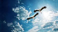 Loving Crane Birds Flying High In Sky HD Wallpaper very beautiful and much attractive.HD Wallpapers download free for desktop background.