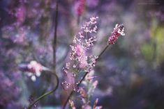 #Naturaleza #tumblr  #conservatuscolores  #details