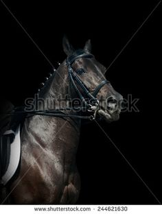 Horse Racing Stock Photos, Images, & Pictures | Shutterstock